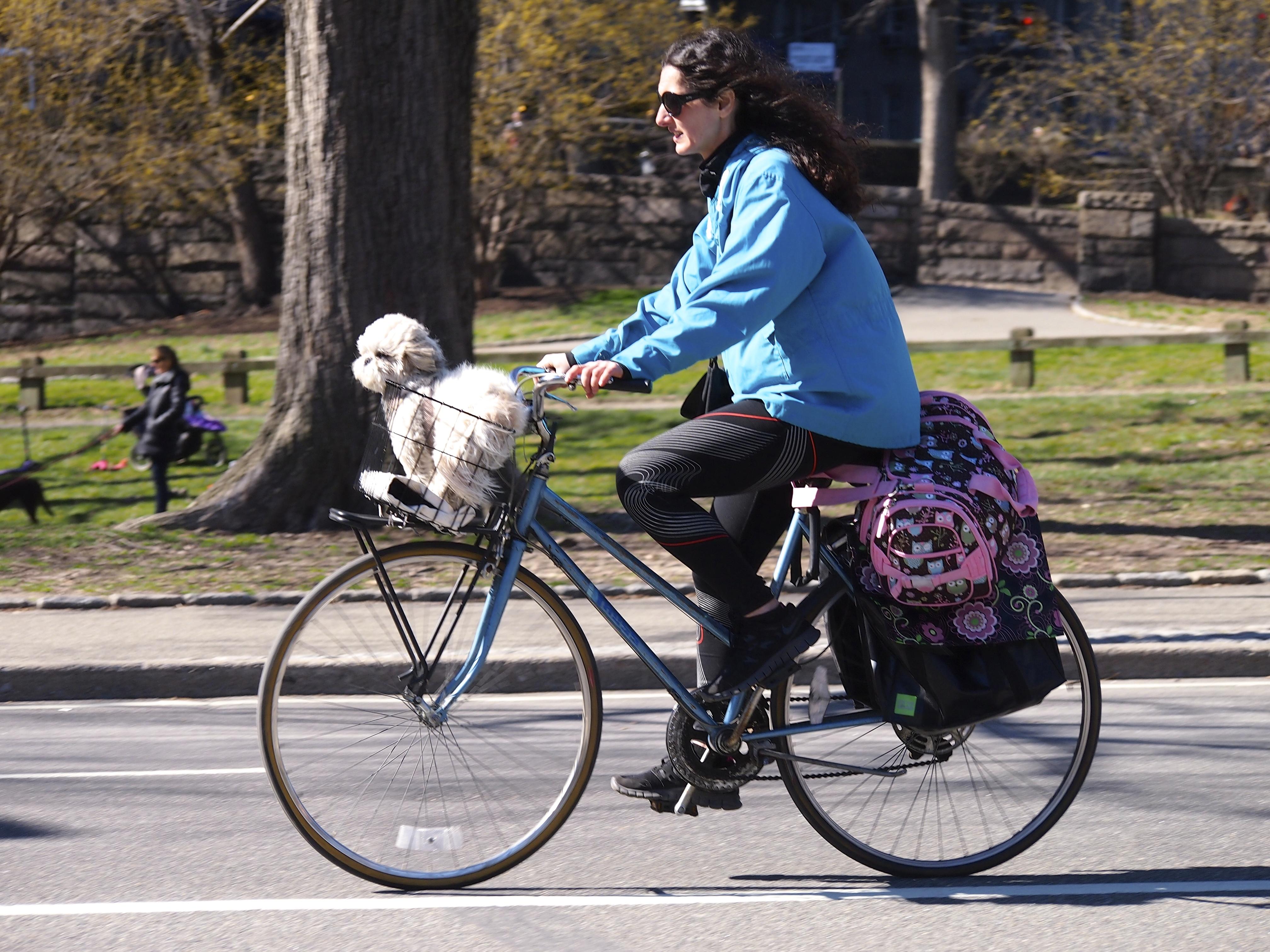 Passeios de bicicleta: melhor amigo sobre rodas