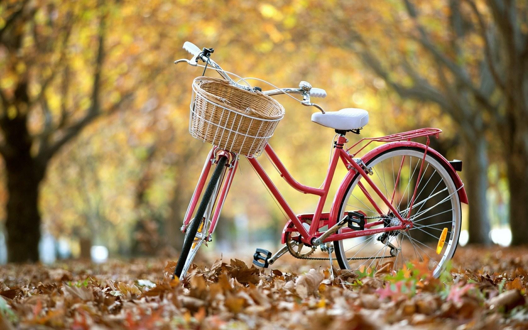 Beautiful Love Wallpapers For Mobile: 3 Cuidados A Ter Para Andar De Bicicleta No Outono